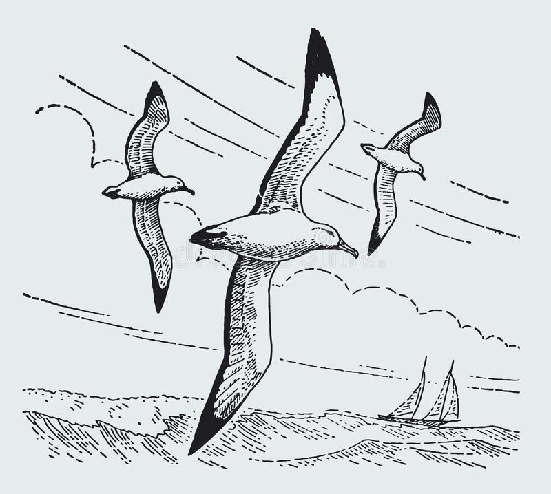 Three wandering albatrosses diomedea exulans flying over the sea royalty free illustration