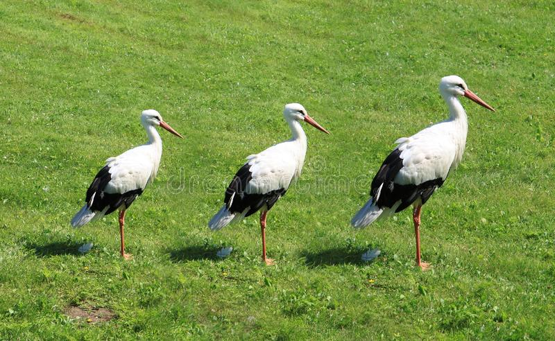 Three white cranes. Were built in a number on a background of a green lawn