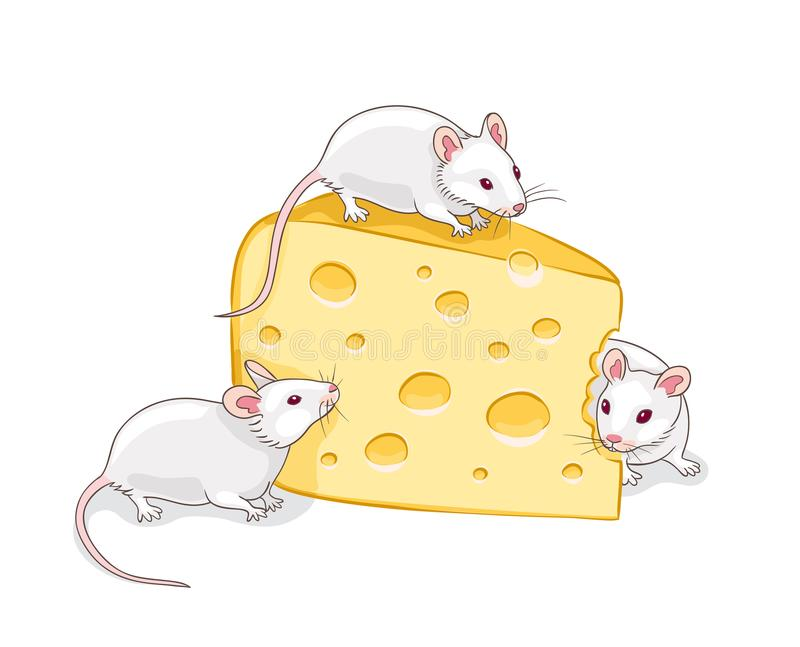 Three white mice with a piece of cheese vector illustration