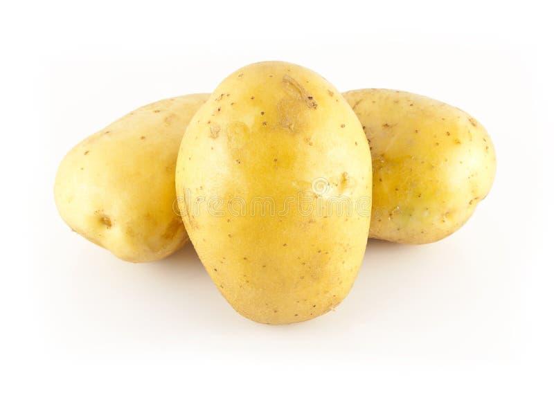 Three White Potatoes Stock Images