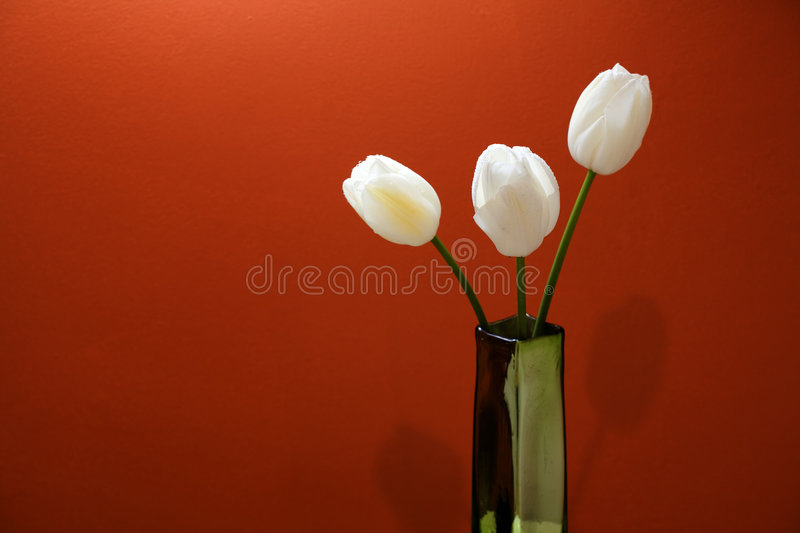 Three White Tulips stock photography