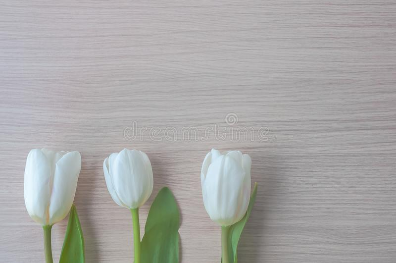 Three white tulips with green stems in a row at the bottom of the image. stock images