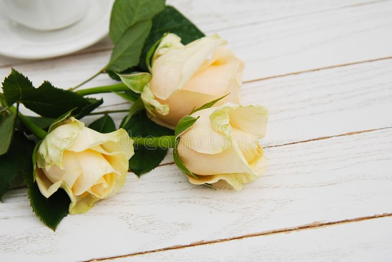 Three White or Yellow Roses on White Wooden Background with copy Space. romantic Greeting Background. Mothers Day or womens Day. stock photography