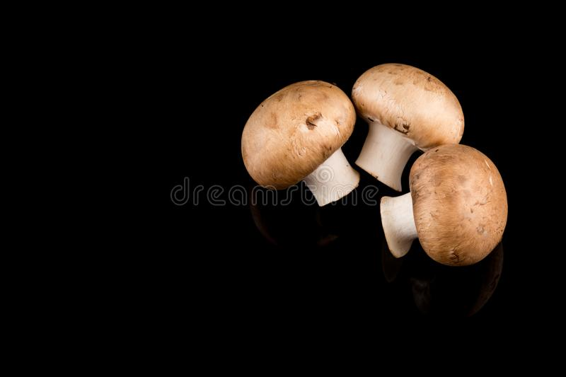 Three Whole brown mushrooms isolated on black background royalty free stock photography