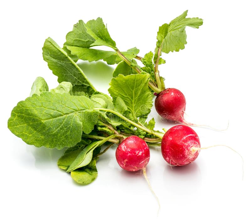 Red radish isolated royalty free stock photo