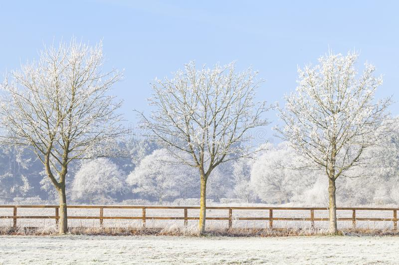 Three winter trees and frozen fence. Beautiful rural winter scene with heavy frost on trees and a two rail wooden fence. Clear blue sky and frozen fields. Three stock images