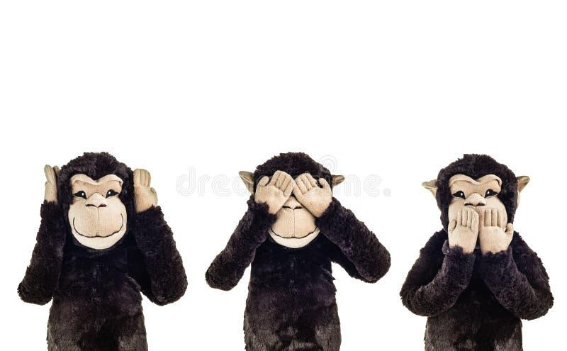 Three wise monkeys. See no evil, hear no evil, speak no evil cartoon monkeys royalty free stock image