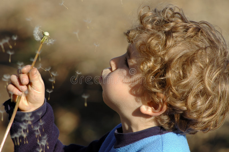 Download Three wishes stock image. Image of flower, wish, blow - 1453011
