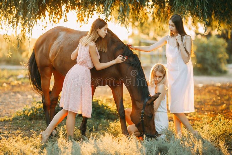 Three women are next to horse at sunset. Three young women are next to the brown horse under the tree at sunset. Backlight stock photo