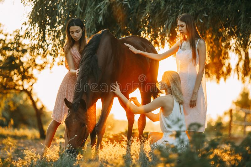 Three women are next to horse at sunset. Three young women are next to the brown horse under the tree at sunset. Backlight stock images