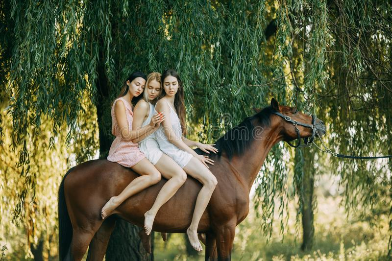 Three women are riding a horse next to tree. Three women are riding a brown horse next to the tree royalty free stock images