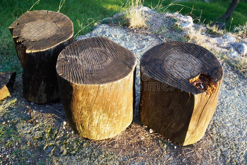 Three wooden logs used as seats. stock images