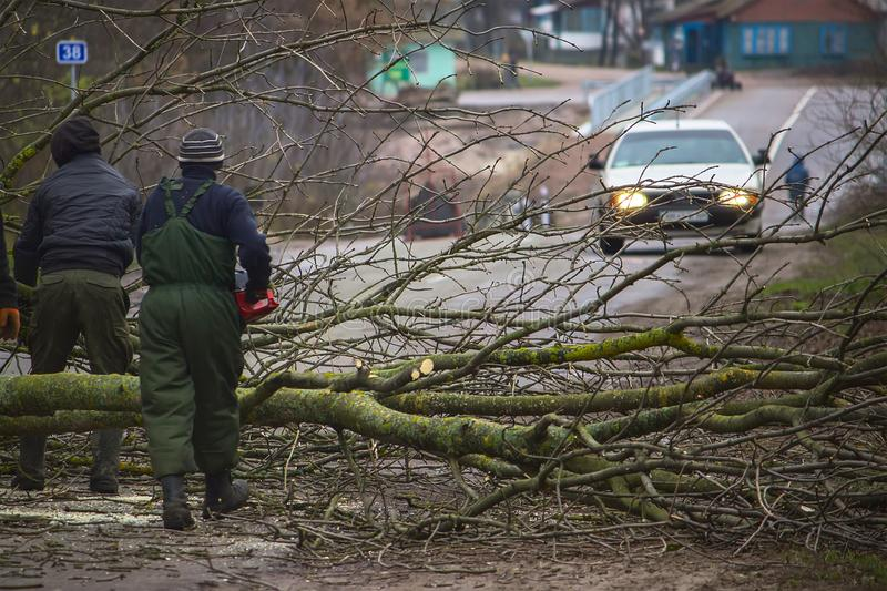 Three workers are picking up a fallen tree from the road royalty free stock photo