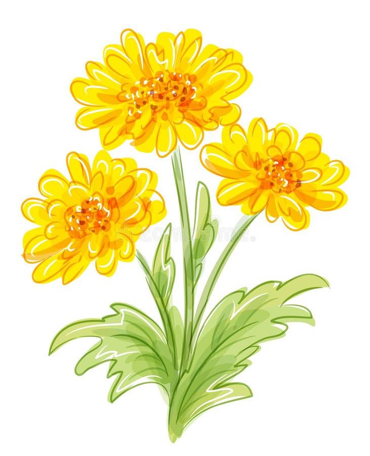 Three yellow flowers. EPS10 vector royalty free illustration