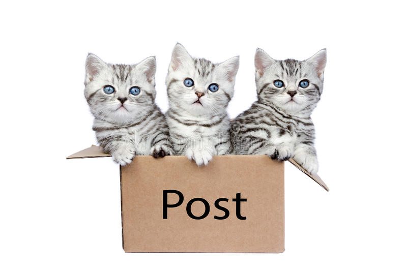 Three young cats in cardboard box with word Post stock image