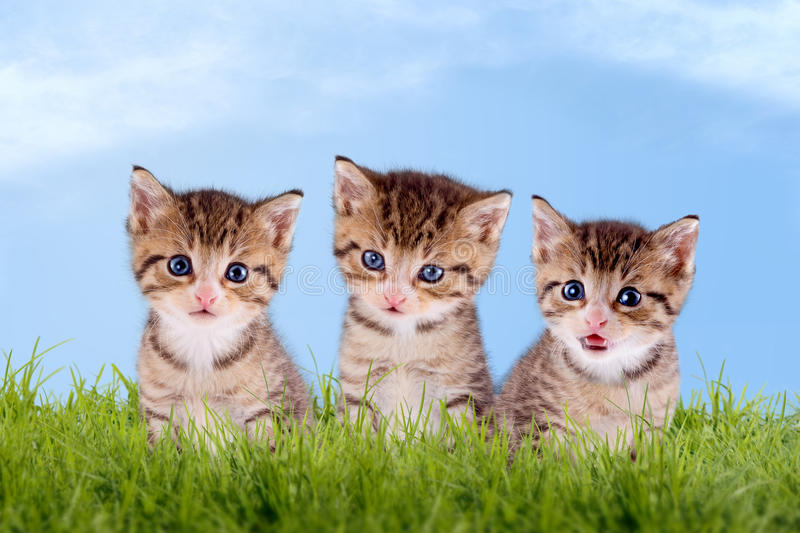 Three young kitten on a green meadow. With blue sky stock images