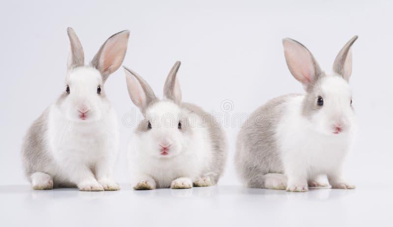 Three young rabbit stock image