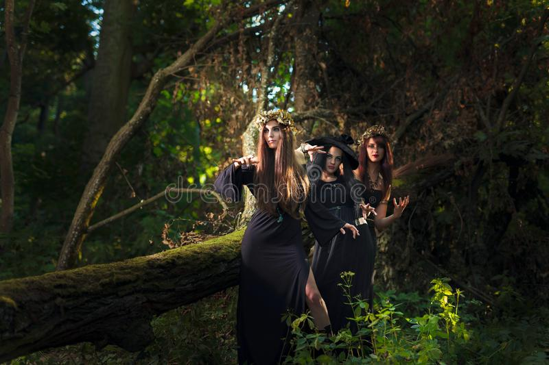 Three young women with long hair in suits of witches in forest stock photography