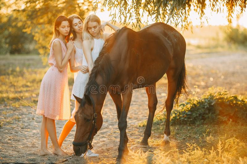 Three young women are standing next to horse at sunset. Three young women are standing next to the brown horse under the tree at sunset. Backlight stock images