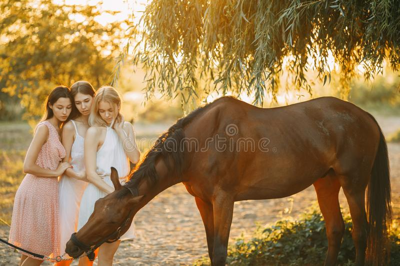 Three young women are standing next to horse at sunset. Three young women are standing next to the brown horse under the tree at sunset. Backlight stock image