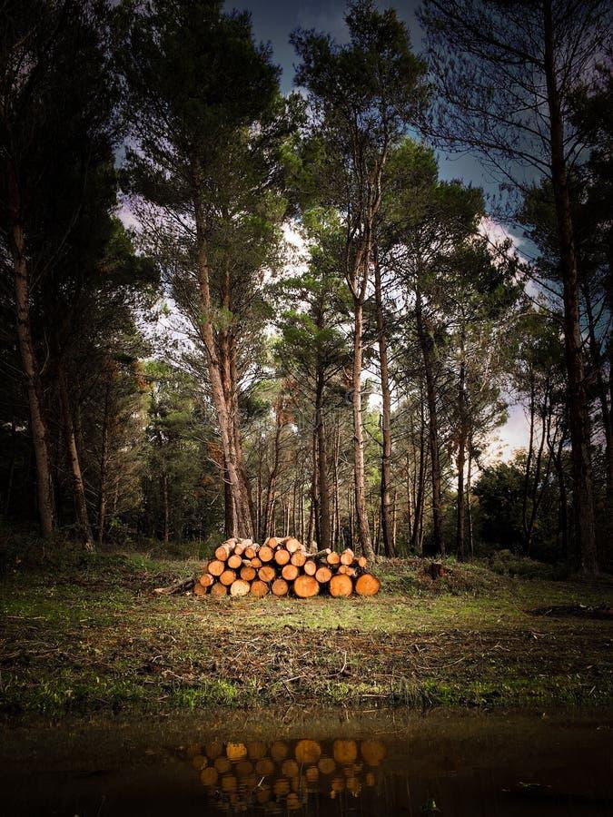 Threes dans la forêt image libre de droits