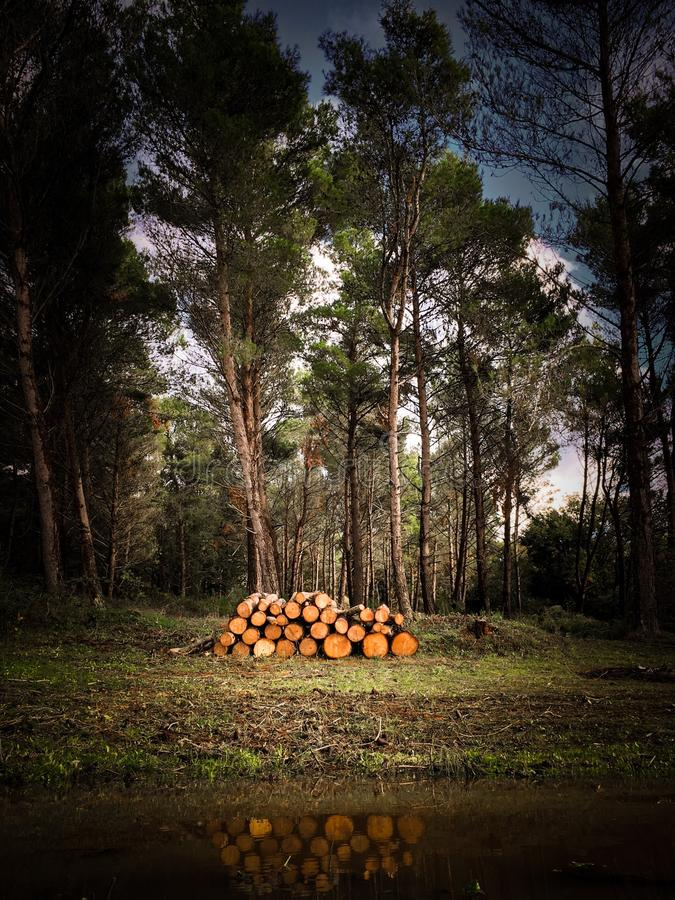 Threes en el bosque imagen de archivo libre de regalías