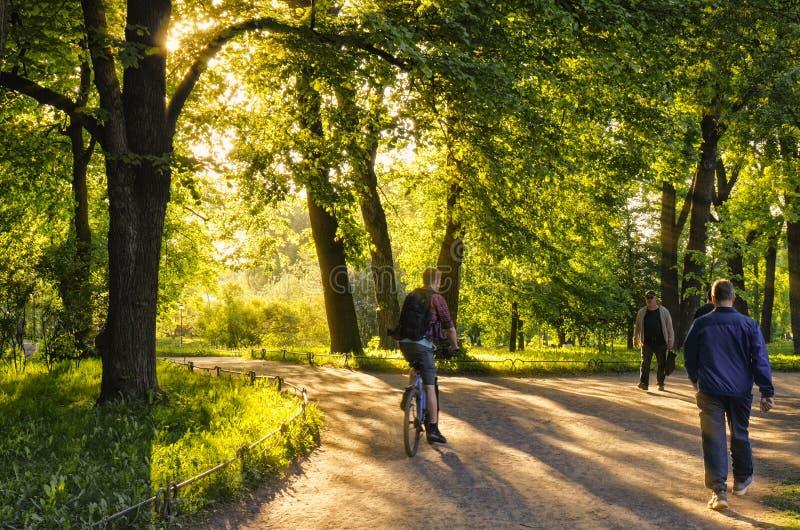 Throug绿色晚上胡同在Tavrichesky从事园艺 免版税库存照片