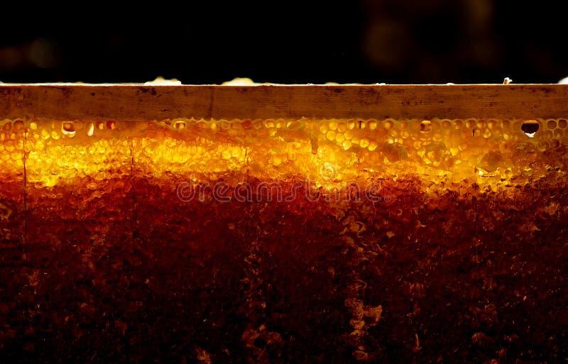 Thuis verzamelend honing royalty-vrije stock fotografie
