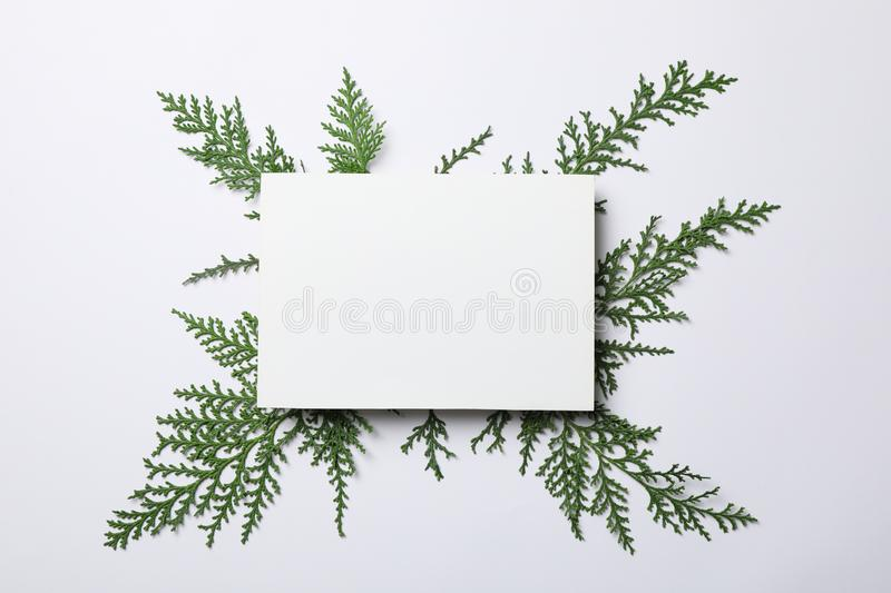 Thuja branches and empty space on white background. Top view stock photography