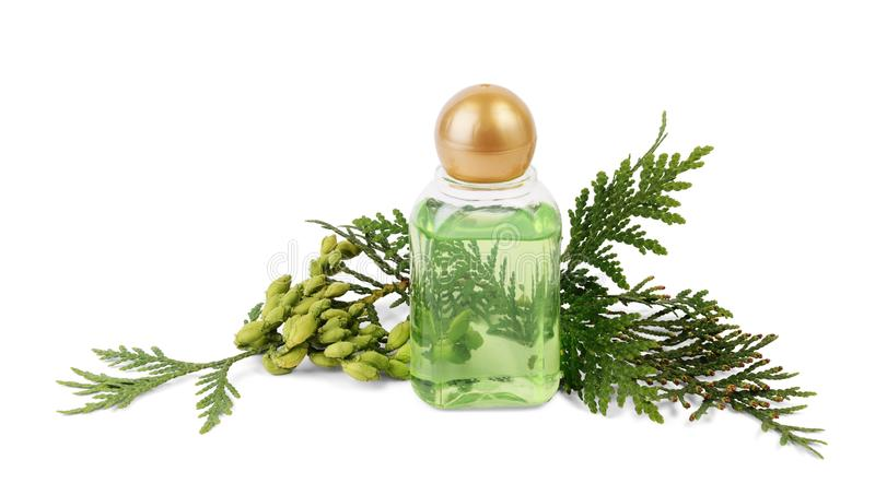 Thuja essential oil in bottle with thuja seeds and foliage stock image