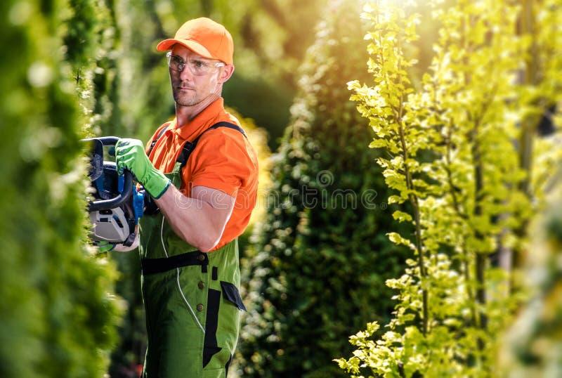 Thuja Green Wall Shaping stock image