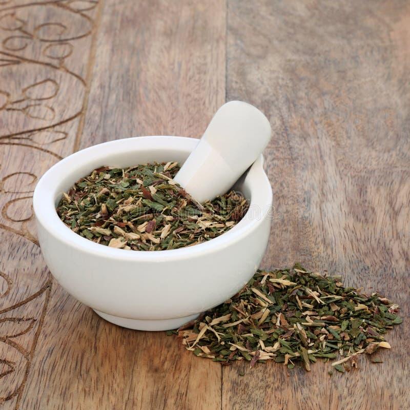 Thuja Leaf Herb stock photo