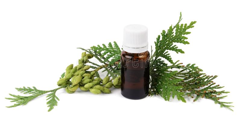 Thuja oil in bottle with thuja seeds and foliage stock photography