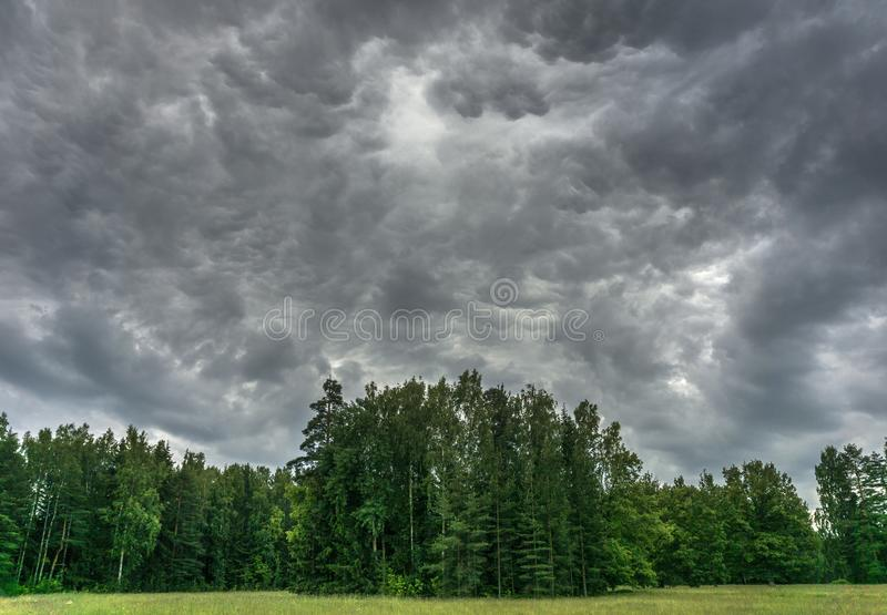 Thunder in the forest stock images