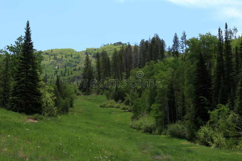 Thunderhead Trail, Steamboat Springs, Colorado. Steamboat Springs, Colorado, is located in the upper valley of the Yampa River, along U.S. Highway 40. The city royalty free stock images