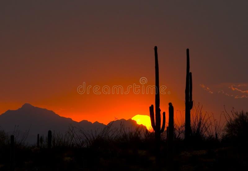 Download Thundershower Sunset stock photo. Image of sunset, desert - 387444