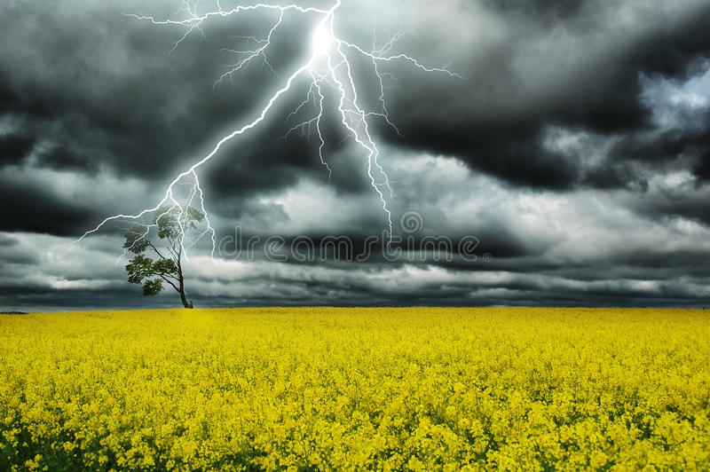 Download Thunderstorm stock photo. Image of cloudy, plants, fresh - 21901254