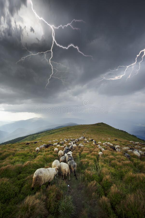 Image result for pictures of animals in a storm