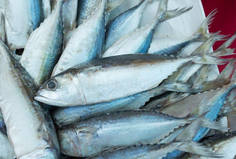 Thunfisch, östlicher kleiner Thunfisch, Thunnini, Longtail-Thunfisch stockfotografie