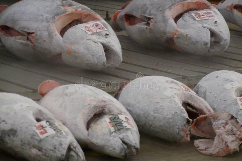 Thunfisch auf Tsukiji-Markt stockfotos
