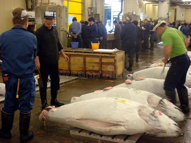 Thunfisch für Verkauf stockfotos