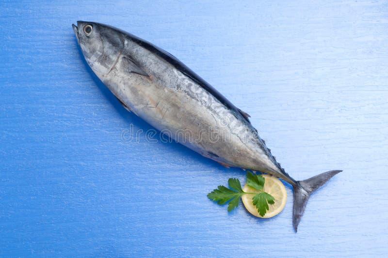 Thunfisch mit Zitrone lizenzfreie stockfotografie