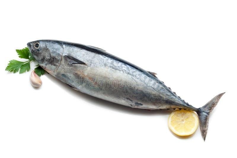 Thunfisch mit Zitrone lizenzfreie stockbilder