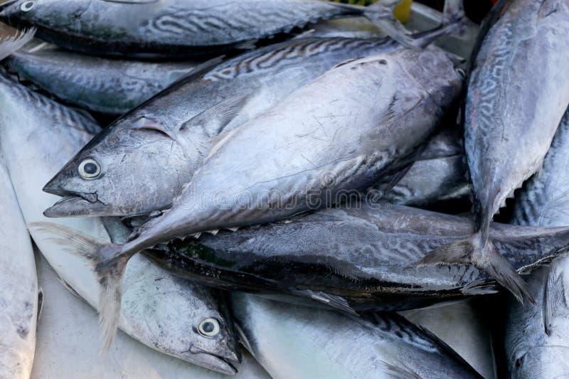 Thunfisch oder roter Thun Longtail auf dem Gerät stockfotografie