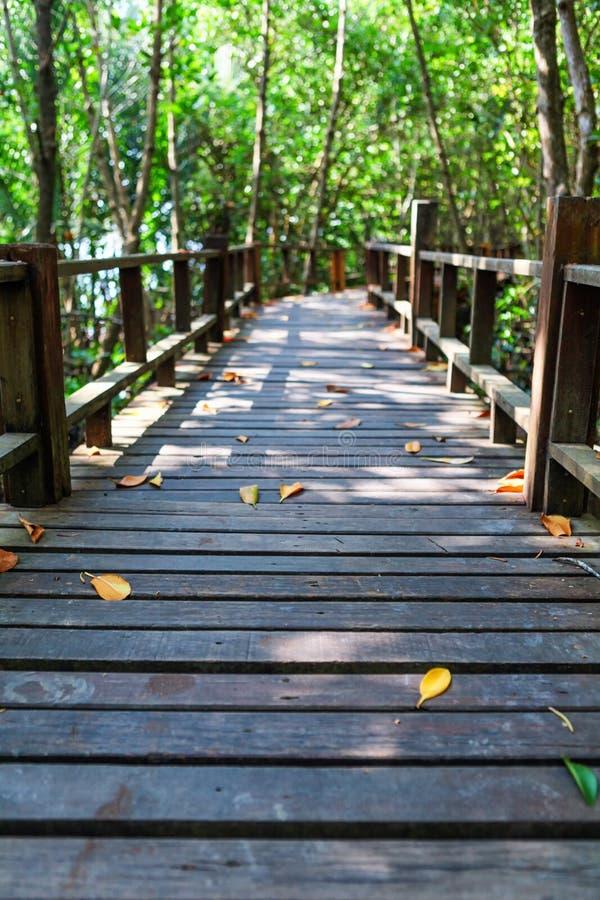 Thung Kha海湾美洲红树森林木走道 Chumphon,泰国 免版税库存照片