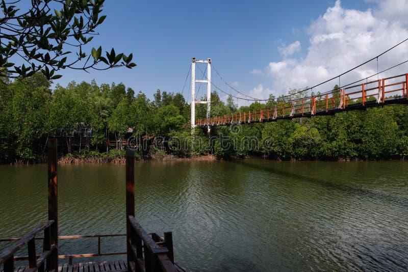 Thung Kha海湾美洲红树森林木走道 Chumphon,泰国 库存照片