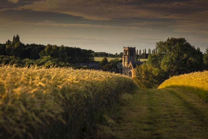 Thurgaton, Nottinghamshire, le R-U, juillet 2019, champ de blé et tour d'église près de Thurgaton photographie stock