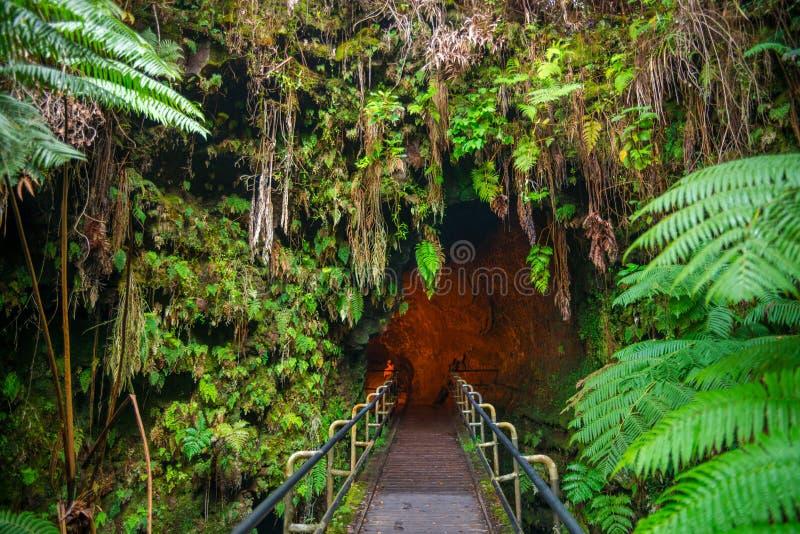 Thurston Lava Tube in Hawaii Volcano National Park, Big Isla. The Thurston Lava Tube in Hawaii Volcano National Park, Big Island, USA stock photos