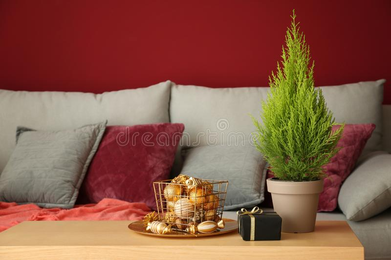 Thuya tree with Christmas gift and decorations on wooden table in room stock photos