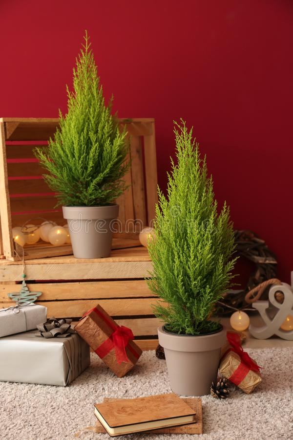 Thuya trees with Christmas gifts and decor near color wall royalty free stock images